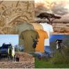 All Hunting T-Shirts Koedoe & Co
